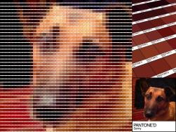 Sonny Pantoned Portrait