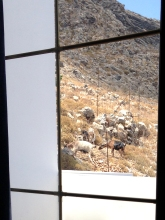 Awakened by goats
