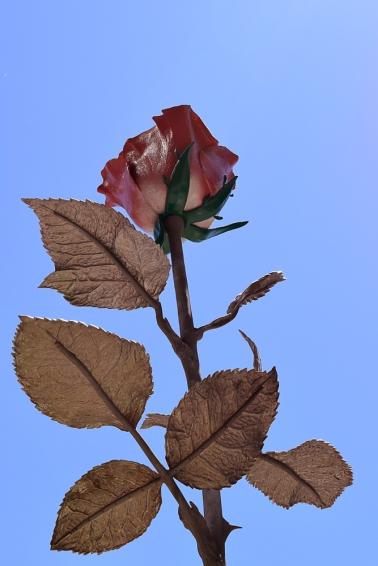 Vegas Rose